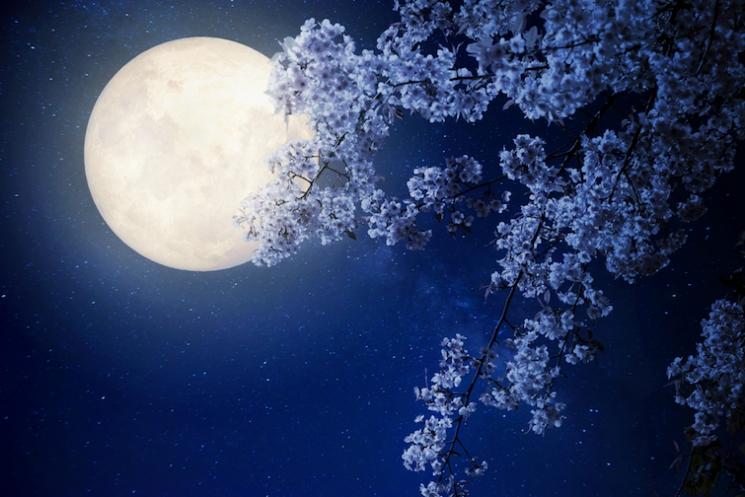春の夜デートに。ふたりで迷い込みたい「夜の浪漫遊園地」