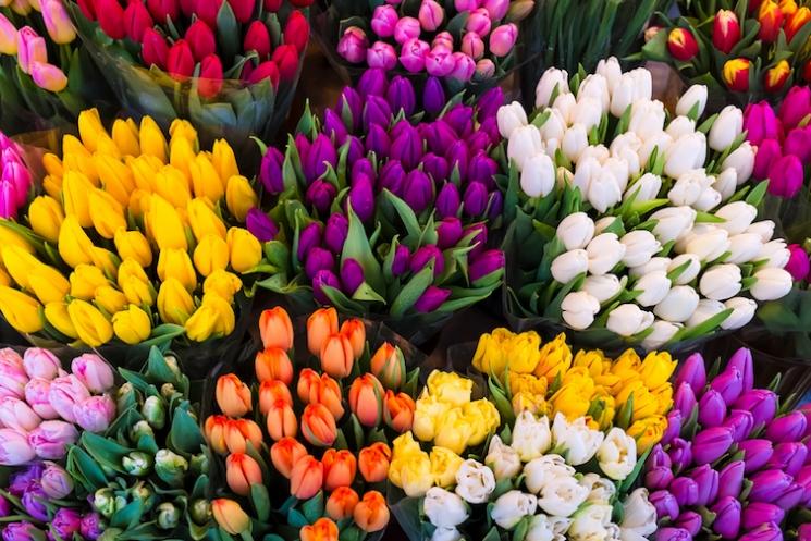 春の訪れを告げるチューリップに秘められた、ロマンチックなストーリー