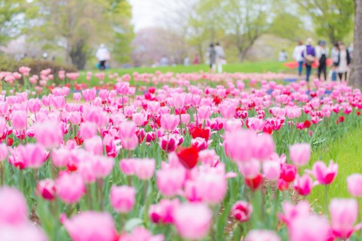 無料入園日もチェック!東京近郊GWデートで行きたい花畑6選