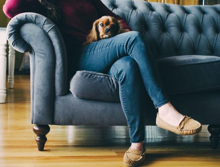 ソファーに座り犬を抱く姿