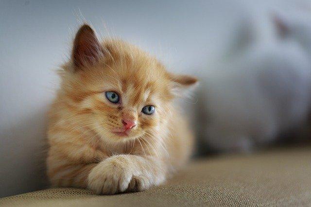 猫の可愛い写真